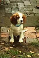 puppy Rex
