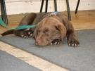 Puppy class 2012