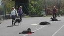 Adult dog training