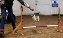 Fun dog Agility