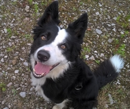 Dog training in your own home and one to ones