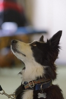 Help for your dogs behaviour problem